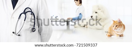 veterinary with stethoscope in pocket, dog and cat, vet clinic banner concept