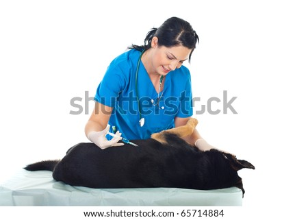 Veterinary woman injecting a dog lying on table