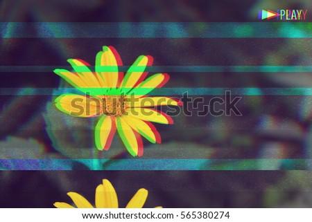VHS effect flower #565380274