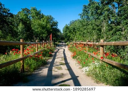 Via Verde Camino de la Plata in spring with poppies Foto d'archivio ©