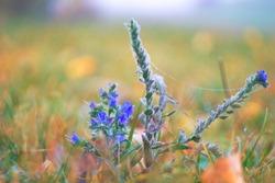 Vibrance autumn wild flower on field