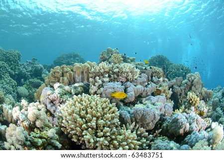 Vibrant and colourful tropical reef scene. Red sea, Egypt.