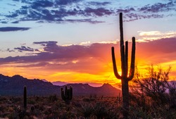 Vibrant Arizona Desert Sunrise With Cactus & Mountains In Background near Phoenix and Scottsdale AZ.