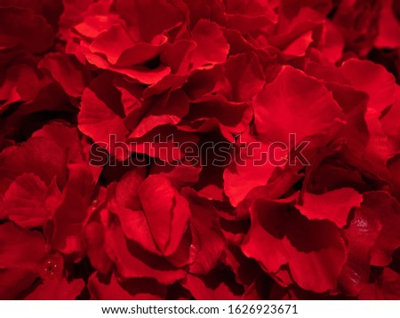 Vibrant artificial plastic red roses flower blossom romantic botany petals pattern textured background for Anniversary Wedding Day or Valentine's Day celebrated gift of love on February