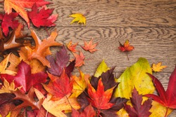 Vibrant autumn leaves arranged in a boarder; bright fall leaves of red, yellow and orange