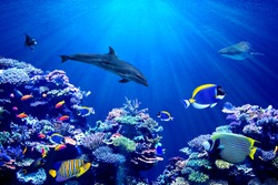Vibrant background of colorful coral reef with beautiful marinefish, Whale shark, Manta ray and Dolphin