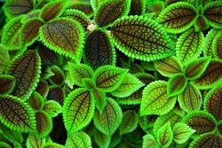 Vibrant color trippy plant, green leaves texture