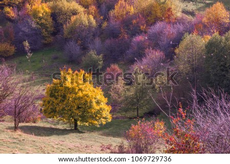 Vibrant colored trees at mountainside in late autumn with garbage all around. Beautiful, colorful nature background. #1069729736