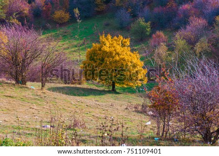 Vibrant colored trees at mountainside in late autumn with garbage all around. Beautiful, colorful nature background. #751109401