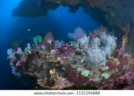 Vibrant coral reef on the ledge of a deep undersea wall. Raja Ampat, Indonesia.  #1155196888