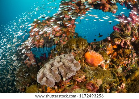 Vibrant coral reef with hundreds of glass fish at the SS Yongala ship wreck, Great Barrier Reef, Australia #1172493256