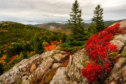 Vibrant fall colors at Acadia National Park near the peak of the mountain on an overcast day with bright red orange and yellow colors in the trees and strong foreground interest of three trees