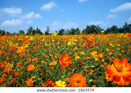 Vibrant field of wildflowers