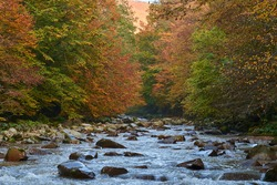 Vibrant landscape of a river slowly flowing through a colorful forest in the mid autumn