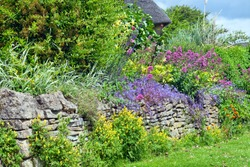 Vibrant pink, blue, yellow flowers in full bloom growing wildly over stone wall in a cottage garden, Cotswolds, UK, on a summer sunny day . Floral display .