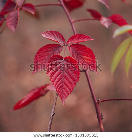 Vibrant red autumn foliage vibrant background. #1501595315