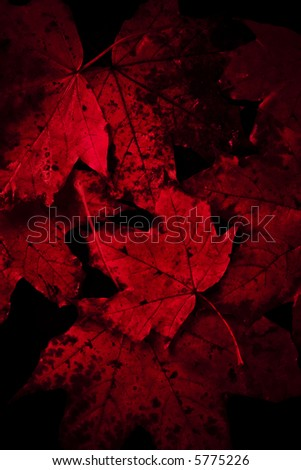 Vibrant-red dark amazing spooky autumn leaves background