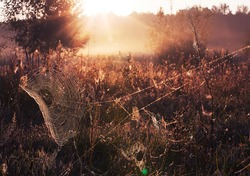 Vibrant scenic spider web covered by morning dew field.