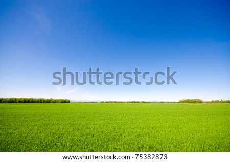 Vibrant simple meadow landscape