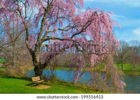 Vibrant Spring blossoms by the lake in Holmdel Park in New Jersey.