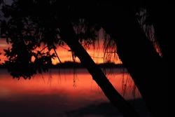 Vibrant sunrise in red backlights pohutukawa tree at Memorial Park in Tauranga New Zealand.