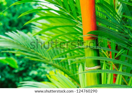 Vibrant Tropical Plants In Hawaii, Abstract Background