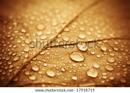 Vibrant vintage-colored leaf with rain drops