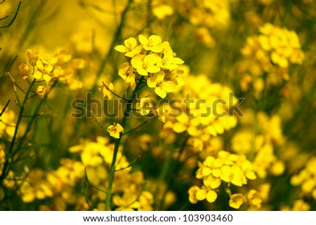 Download image Vibrant Mustard Color PC, Android, iPhone and iPad