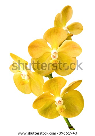 Vibrant yellow tropical orchid flower