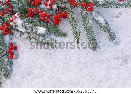 Viburnum with christmas  tree branch  on white snow