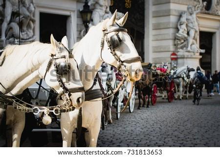 vienna  austria  traditional...