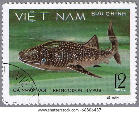 VIETNAM - CIRCA 1980: A stamp printed in Vietnam shows whale shark - Rhincodon typus, series is devoted to saltwater fish, circa 1980 - stock photo