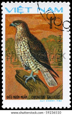 """VIETNAM - CIRCA 1982: A Stamp shows image of a Short-toed Eagle with the inscription """"Circaetus gallicus"""" from the series """"Birds of prey"""", circa 1982"""