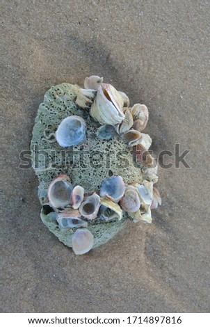 Vietnam nature beach coral chells  Photo stock ©