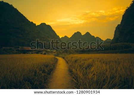 Photo of Vietnam traditional house in northern Vietnam. Yellow rice field in village, countryside in Vietnam. Royalty high-quality free stock image of yellow rice fields prepare harvest in valley and mountains