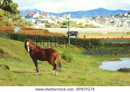 Vietnamese Mountain Cityscape with a Horse on a Foreground