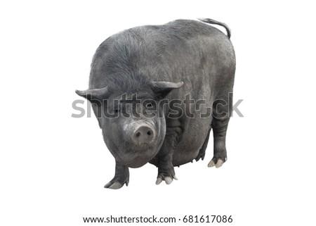 vietnamese piggyback pig...