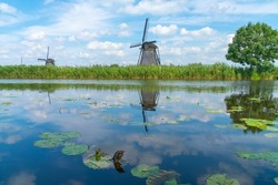 View across calm water with water-lily leaves in canal to historic windmill and one tree in long grass on other side, Kinderdijk, Netherlands.