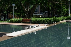 View across pool with seagulls in a public park