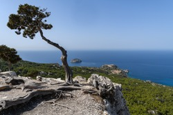 View across the Mediterranean sea in Rhodes with a lone bent tree