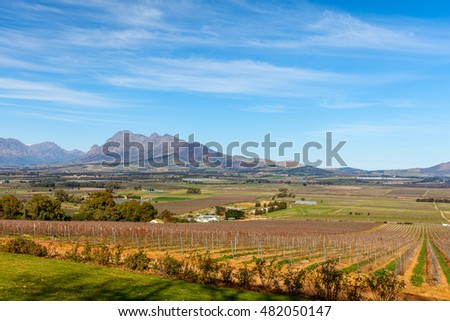 View across vineyards landscape with mountain backdrop in Cape Town South Africa