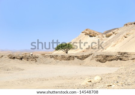 View Arabian Desert, Egypt, Africa. - stock photo