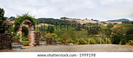 View at at Sonoma valley with rows of grapes from California winery