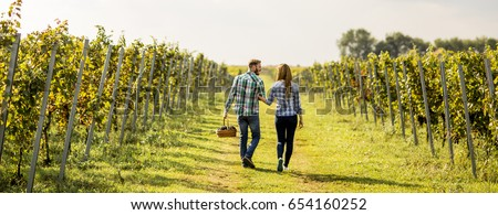 View at farmers harvesting grapes in a vineyard
