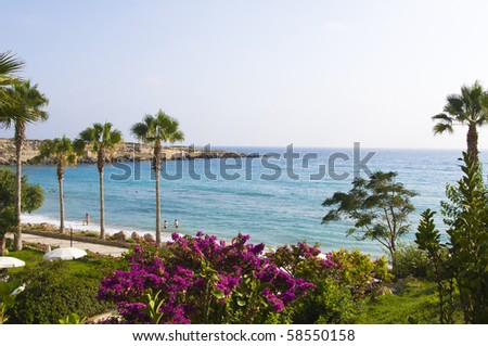 View at the hotel garden and beach with a palm trees