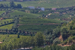 View at the typical landscape of the highlands in Peso da Régua, north of Portugal, typical farms buildings and levels for agriculture of olive tree groves......