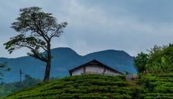 View at Wayanad, Kerala