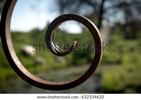 View behind the old gate on a green meadow. Doorkijkje door het oude hek op een Hollands weideveld. Stockfoto ©