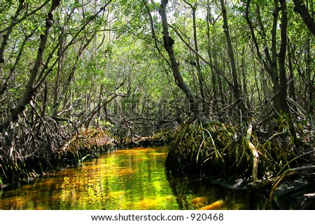 view down a small channel of a mangrove forest