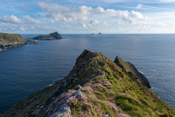 View from a cliff in Ireland with pink flowers in the foreground. View on the Skellig Islands. View from a cliff at the Ring of Kerry. Kerry cliffs in Portmagee.